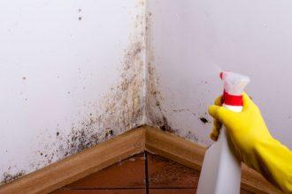 Jak se vyhnout plísním v domácnosti?